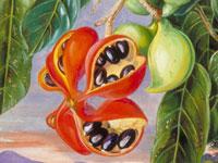 Экзотические цветы и фрукты от художницы Марианны Норт