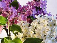 Интервью с Натальей Невровой, автором потрясающих цветочных скульптур