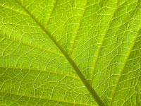 Скачать крупные текстуры с изображением зеленой листвы растений
