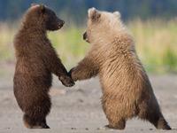 Чуткие и трогательные отношения животных на фотографиях от National Geographic