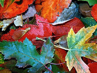 Скачать текстуры с разноцветными опавшими осенними листьями