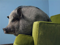Уникальнейшие фотографии очаровательных животных от National Geographic