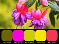 20 готовых цветовых палитр, взятых с оргинальных цветов и растений